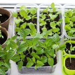 A Step-By-Step Guide for Starting Seeds Indoors