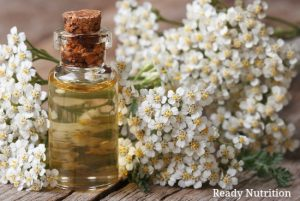 Why Your Medicinal Herb Kit Should Have Yarrow