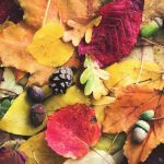 This is a great way to make use all of those gorgeous fall leaves laying around. Let's get sustainable!