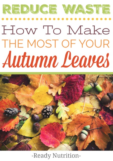 This is a great way to make use of all of those gorgeous fall leaves laying around your yard.