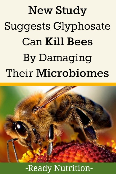 We already know that glyphosate - the main ingredient in Monsanto's Roundup herbicide - can damage the human gutbykilling beneficial bacteria.Now, an alarming new study has revealed that glyphosate can also damage the guts of honey bees.