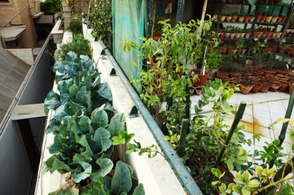 Urban Gardening: Grow Anywhere!
