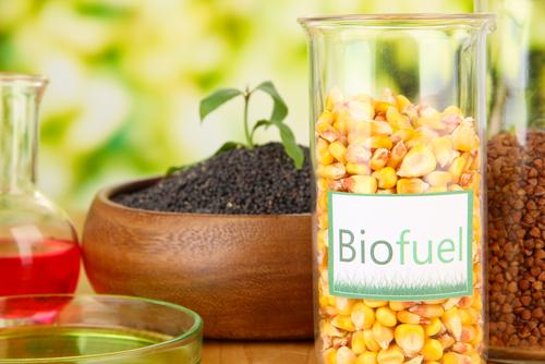 DIY: Make Your Own Biodiesel