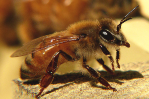 The Best Way to Survive a Swarm of Bees