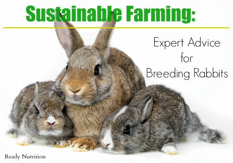 Sustainable Farming: Expert Advice for Breeding Rabbits
