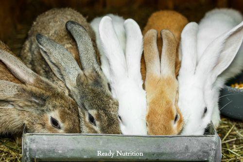 rabbitfeed