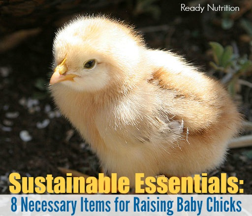 Sustainable Essentials: 8 Necessary Items for Raising Baby Chicks
