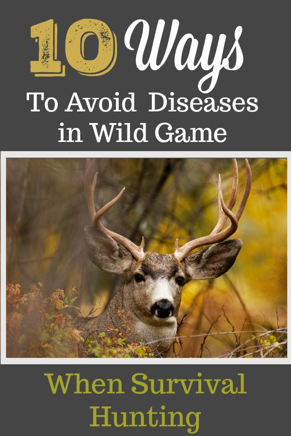 """Just a few tips in case we """"go dark"""" and it hits the fan…chances are that you'll have to hunt to feed your family.  Make sure you do it safely. #ReadyNutrition"""