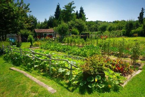 10 Expert Tips To Help You Create Your Dream Garden