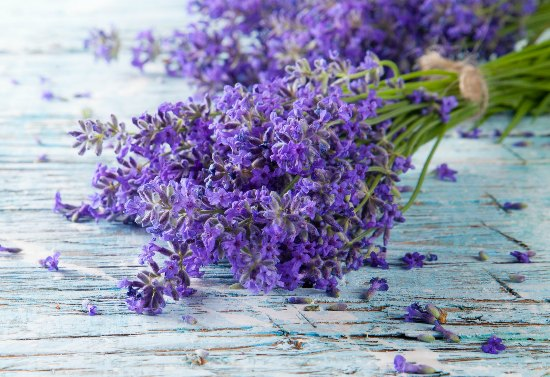 The Many Ways Lavender Is A Must For Natural Health