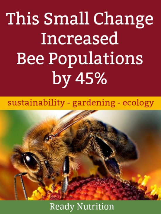 Scientists in Amsterdam have found ways to help their bee population regain its health. Here's how to implement some of their methods in your community. #ReadyNutrition