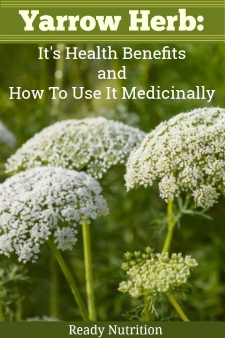Yarrow isn't as well-known as other medicinal herbs such as echinacea or peppermint, but it's nonetheless a useful tool for a more natural approach to health and wellness. Yarrow's uses range from aiding in clearing blood clots to menstrualissues. It can also be used cosmetically! #ReadyNutrition #NaturalLiving #NaturalMedicine